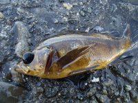 美味しい魚爆釣!!