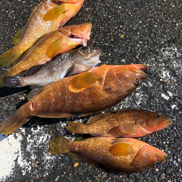 釣りとスピアフィッシング
