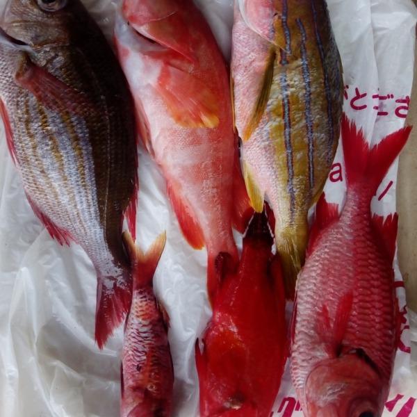 奄美の離島 五目釣り