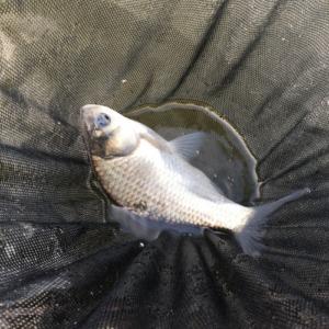 冬のヘラブナ釣り
