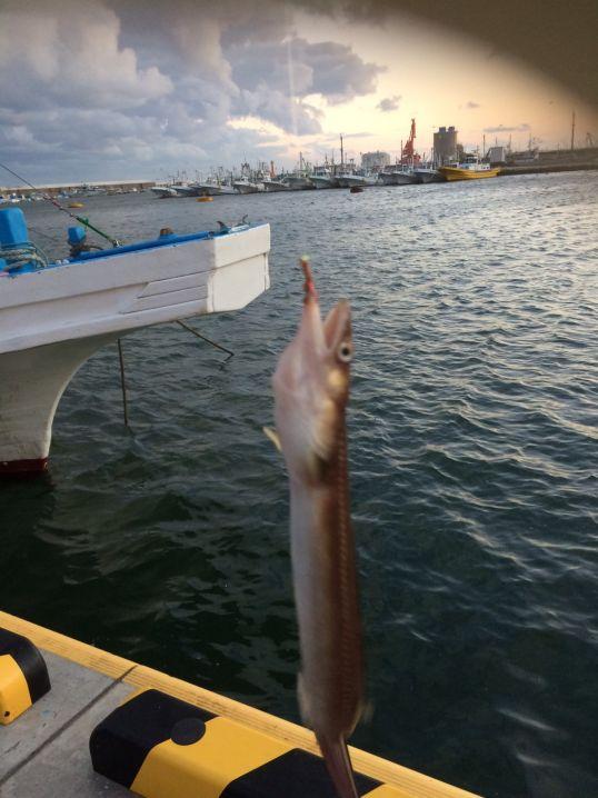 昼間に良型のアナゴが釣れました。