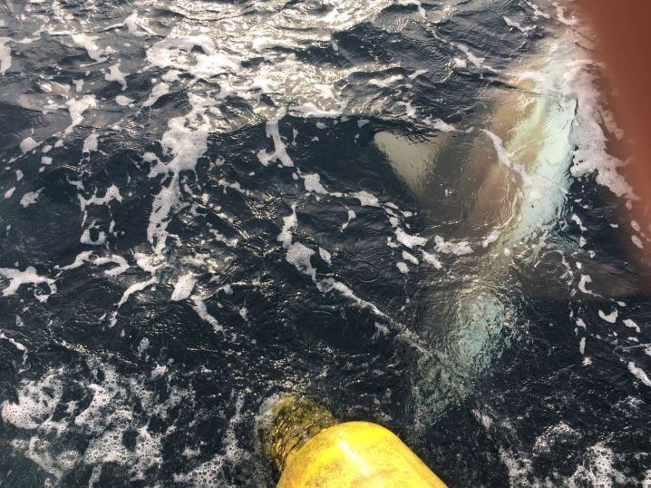 サメ釣り❗
