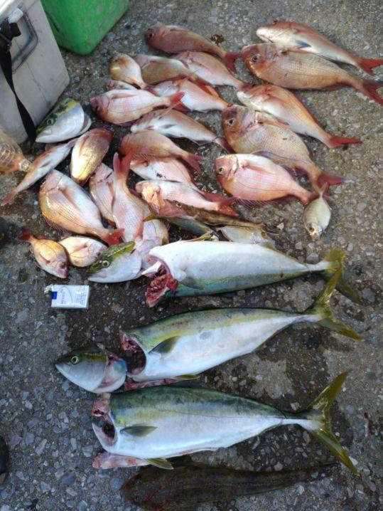 姫島周辺、、タイ、ブリ、、!! 五人の釣果デス