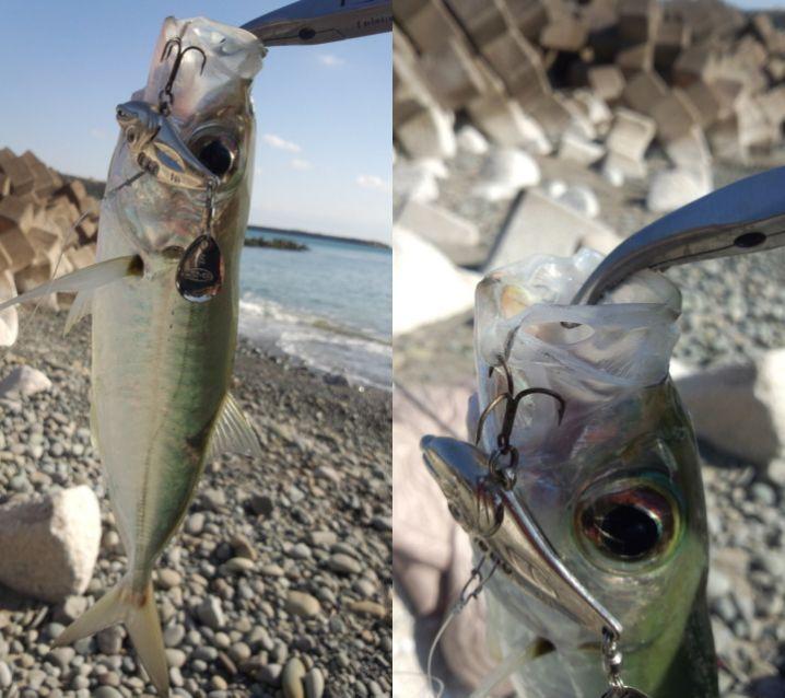 鹿児島県種子島の常連様からの釣果写真です。 釣りの真っ只中に送…