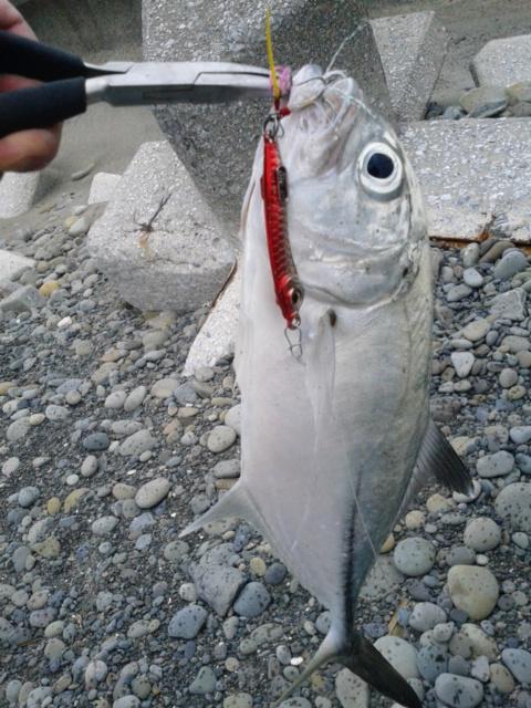 鹿児島県種子島の常連様からの今送られてきた釣果写真です。