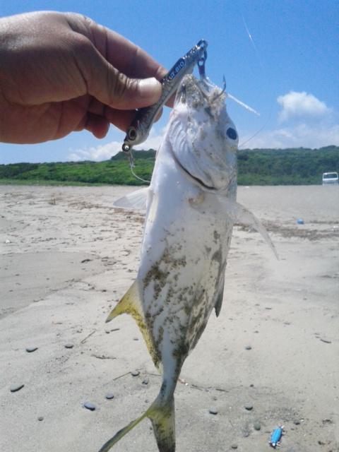 ※メッキは、5月13日 太平洋側サーフでの釣果