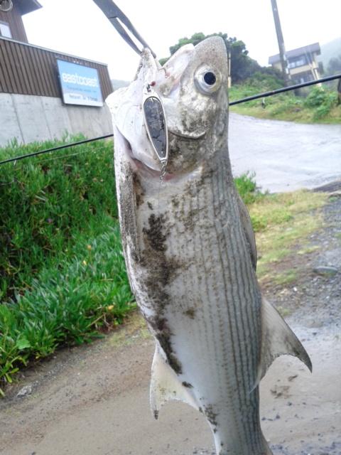 鹿児島県種子島の常連様からの釣果写真です。