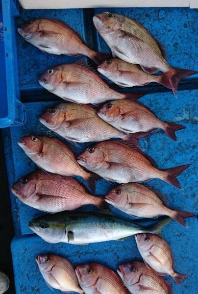 釣果5月19日午後便 真鯛50センチまで10枚☺ チダイ4枚 ハマチ1本