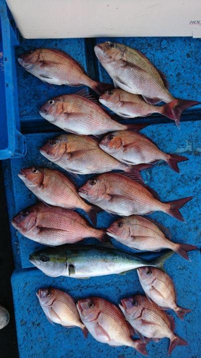 真鯛50センチまで10枚☺ チダイ4枚 ハマチ1本