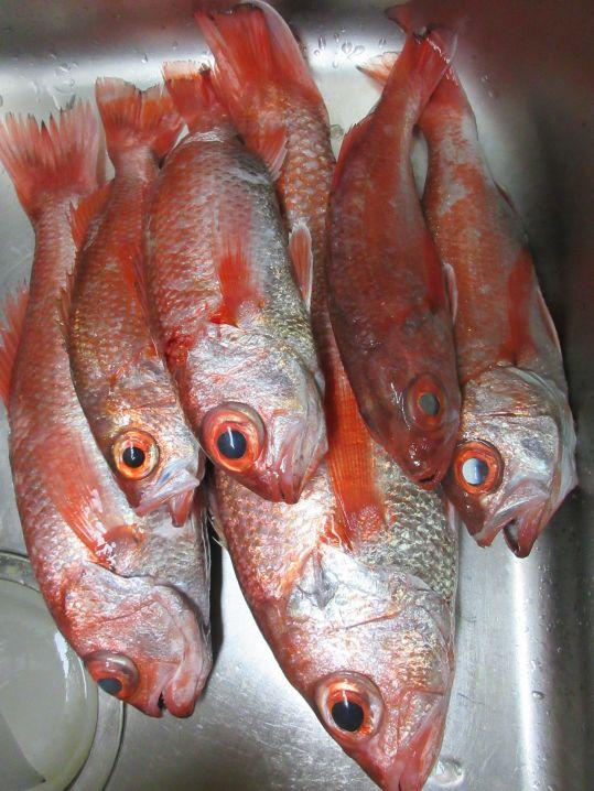 犬吠埼沖でアカムツが爆釣