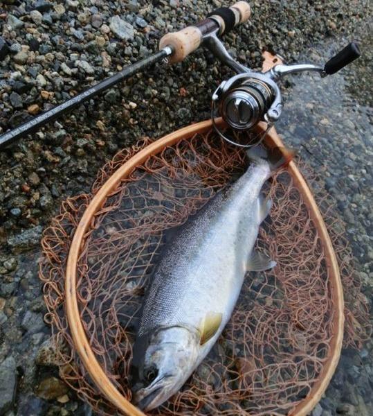 渇水の中、隠れスポットに潜む渓魚との出会い