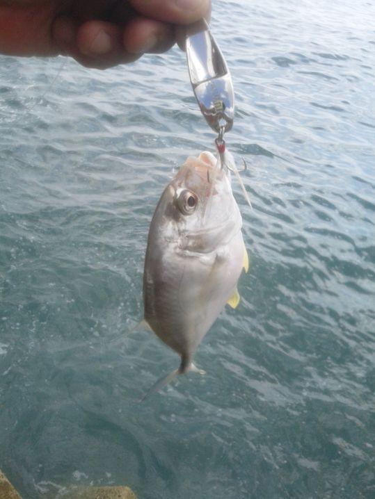 ジグスプーンでメッキの数釣り