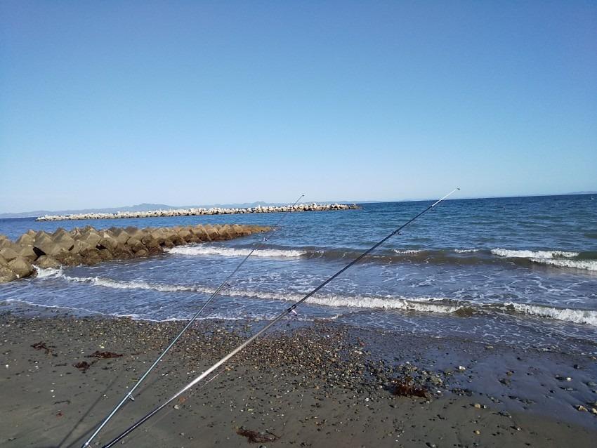 長沢海岸で乗っこみクロダイ41cm