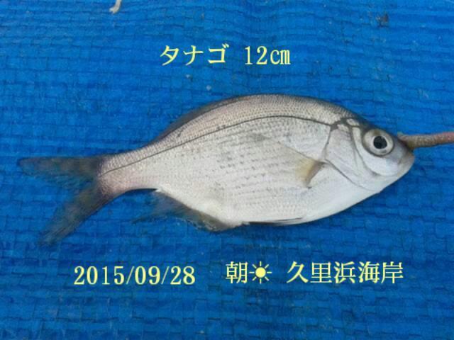 久しぶりに久里浜海岸での釣行だったが、小物ばかり