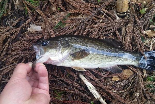 今年初めて釣れた!