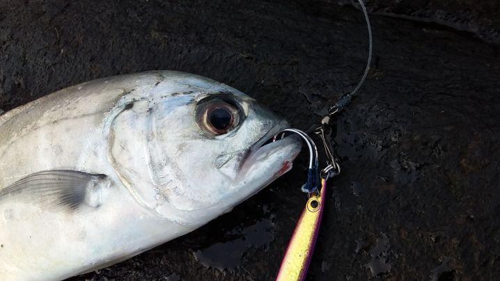 シケ続きの2月、ショアジギの釣果はこのギンガメアジだけでした。