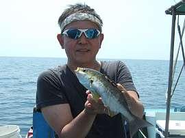 西伊豆戸田舟山沖でイサキ釣りが好釣でした(^^)