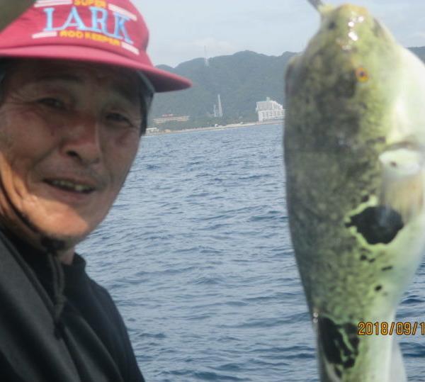 大きな虎フグ含め、フグ爆釣り