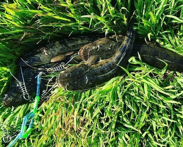 浜名湖釣りでマゴチ4匹ゲット