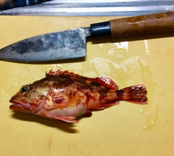 完敗です。魚は冬眠しています(?)