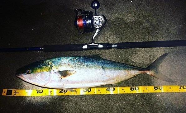 遠州灘サーフの夕方に釣れたワラサ