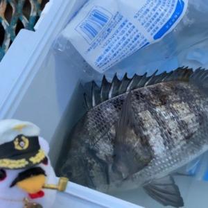 クロダイまた釣りたい…