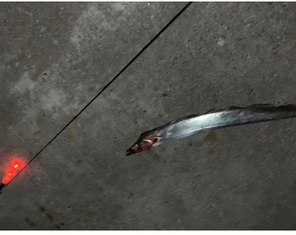 リベンジ!太刀魚釣り!!