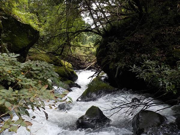 10月最初の渓流は富士川水系へ!!