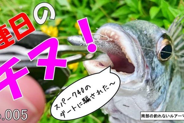 【HITシーン動画有】最近チヌが高活性!!