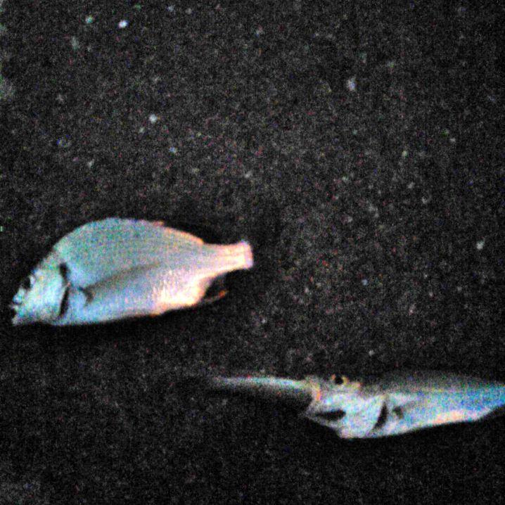 岡山市北浦での釣果