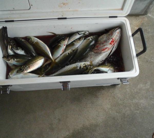 今年も楽しく釣りができますように!!