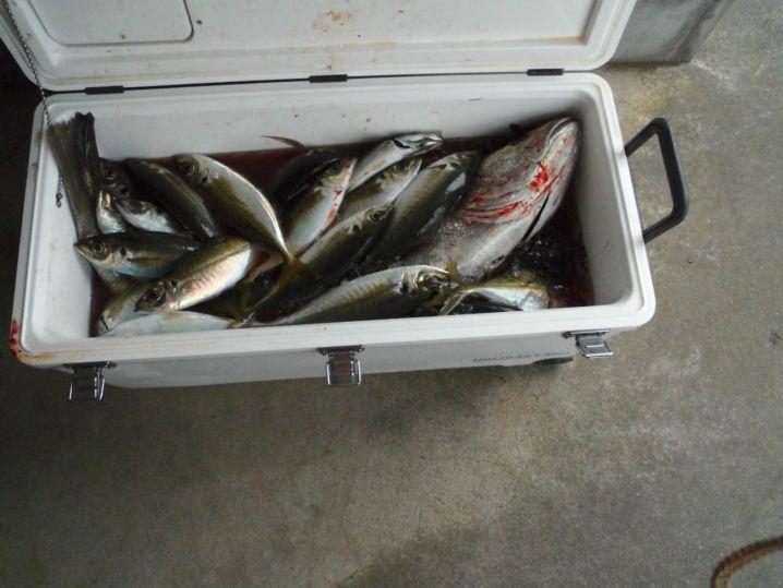 久しぶりに忙しい釣り!アジの入れ食い!