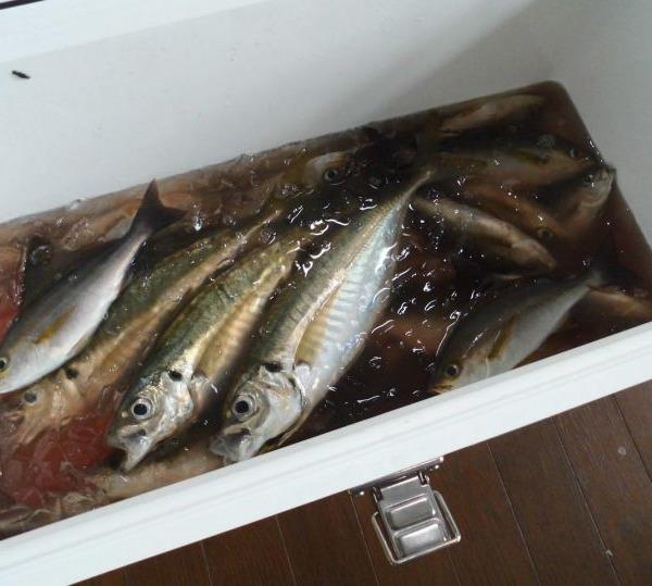 今日も楽しい釣りができました(^^)/ NO.16