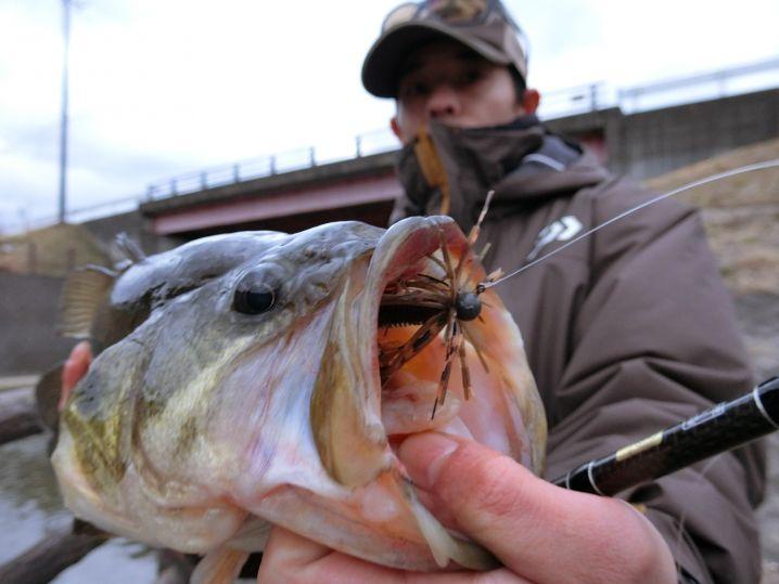 同じ魚ですがいつもと違う感じて撮ってみました(笑)