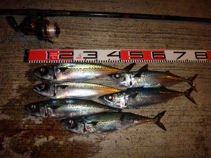 八丈島で夜釣りといえば大サバ祭り。岸壁からオキアミを餌に投げ込め…