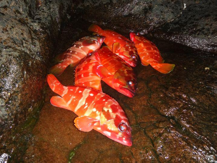 水温約23℃、活性高く、ワームで12尾ゲット、良型のみ6尾キープ…