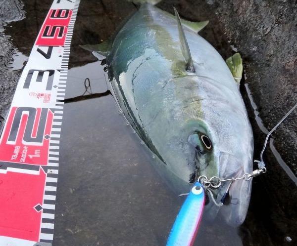 八丈島 今年最初の釣果はヒラマサ 地磯からショアジギで!