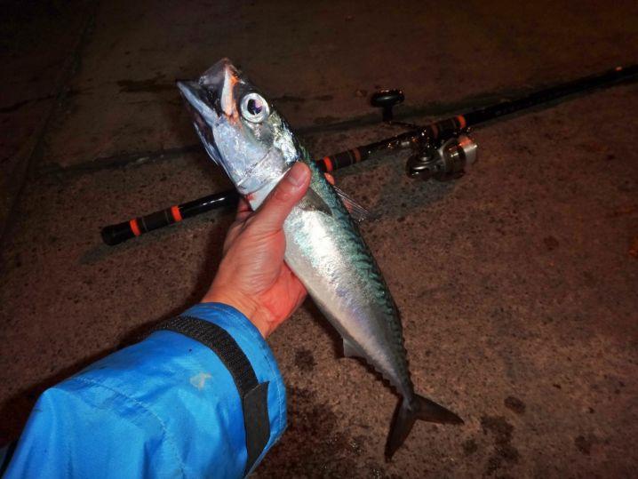 師走の夜のサバ釣りに行ってきました。 季節を問わず良く釣れます…