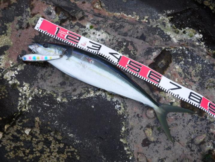 英名レインボウランナーというだけあって、スマートな虹色の魚体が綺…