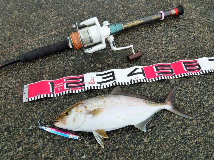 今月は週末毎に色々と忙しく、ひと月ぶりの釣行。 夏から釣れ続い…