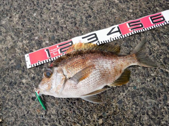 台風前のおかず釣りでの意外なゲスト!