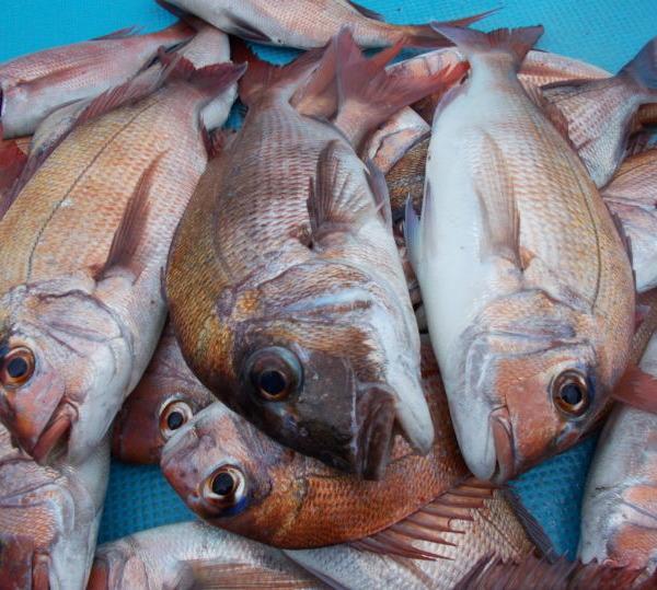 鯛にあらずは魚にあらず