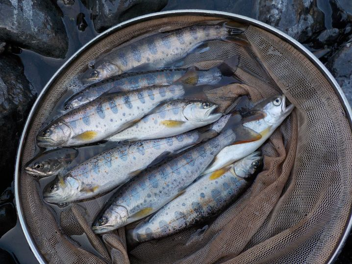 シーズン初の大井川水系への釣行