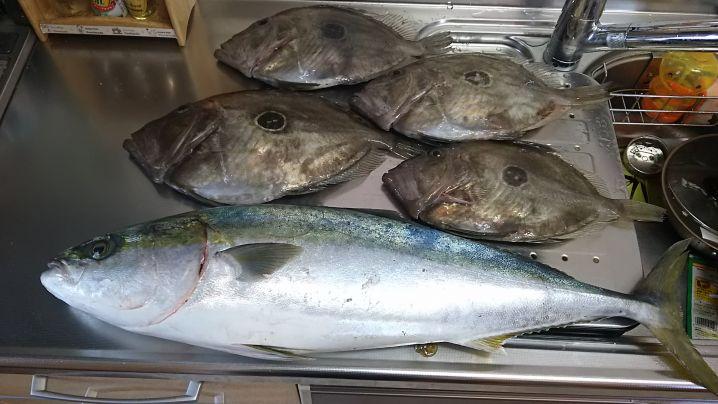 マトウダイは40オーバーが4匹と、まずまずの釣果。