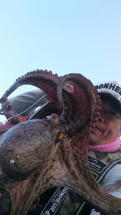 この蛸の模様が…なんとも言えません👀‼