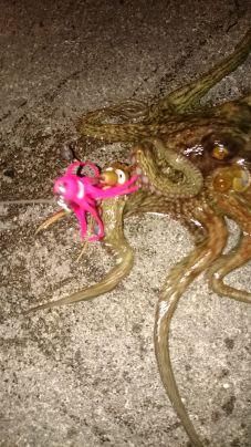 小さい寒蛸get⤴いい感じ❗