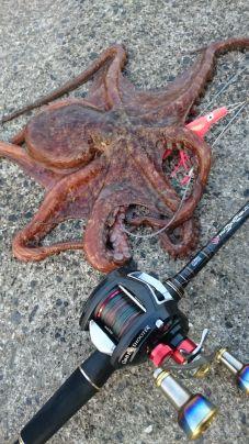 デビルエイトにタコベイトピンクで…沖の藻場を攻めて蛸get
