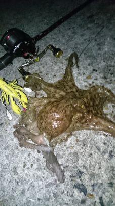 釣り人が多い中での1蛸