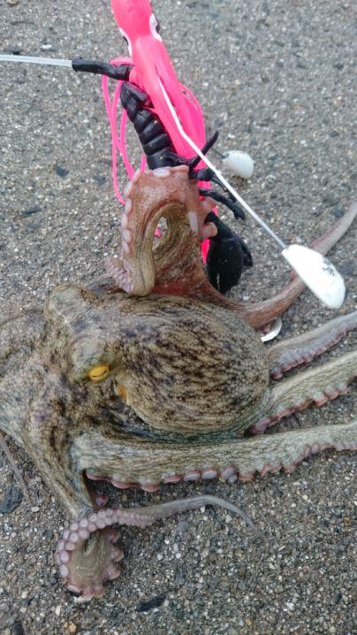 2蛸目→チビ蛸‼オマケで釣れた笑⤴