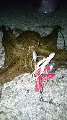防波堤際で蛸🎵